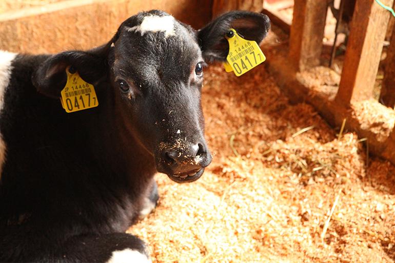 3代に渡り続く酪農家