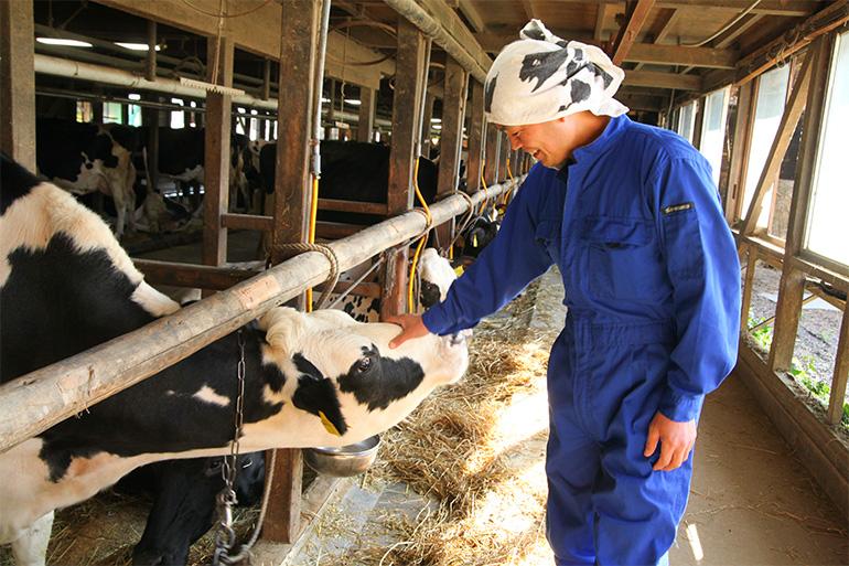 クリーンミルク生産農場「神田酪農」の飼育方法