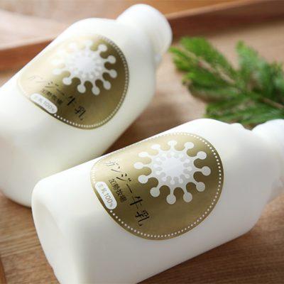 希少な乳牛から搾られる「ガンジー牛乳」