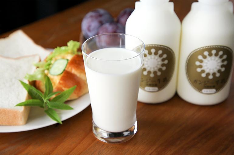 一度は飲んでみたい!希少なガンジー牛の「極上ミルク」