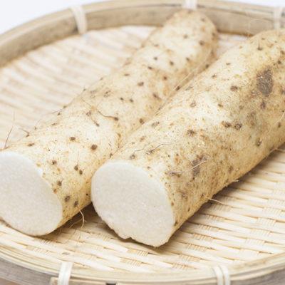 新潟砂丘特産のシャキシャキ甘い長芋