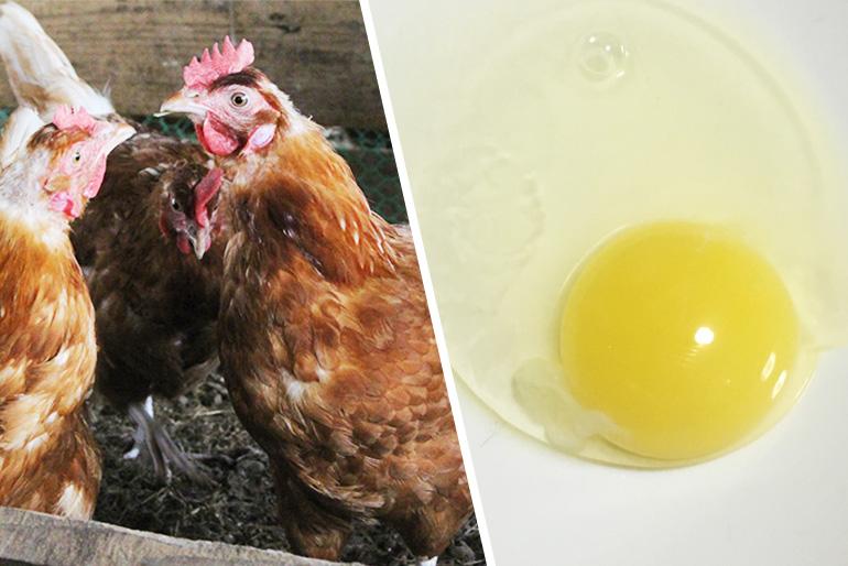 2.養鶏にも取り組み高品質のたまごを生産