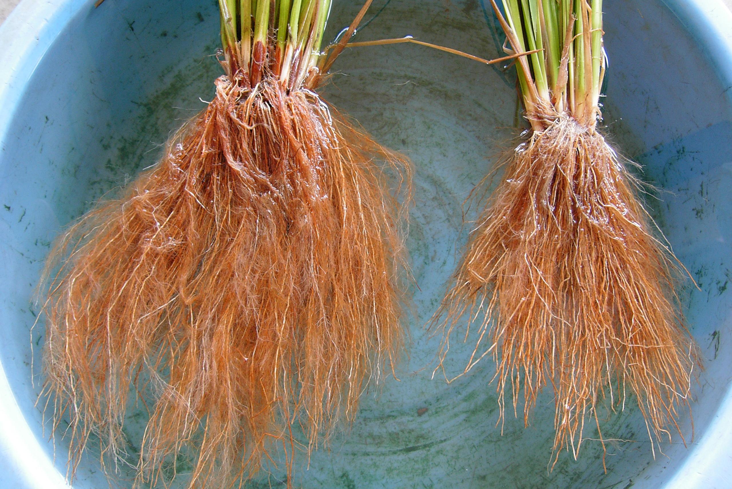 細かい根っこまでぐんぐん育つ肥沃な土壌