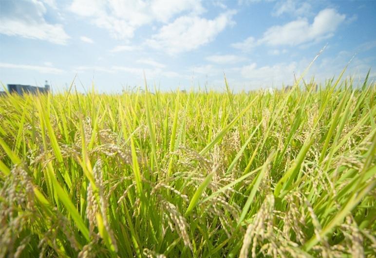 安心で選ぶなら「特別栽培米」です!
