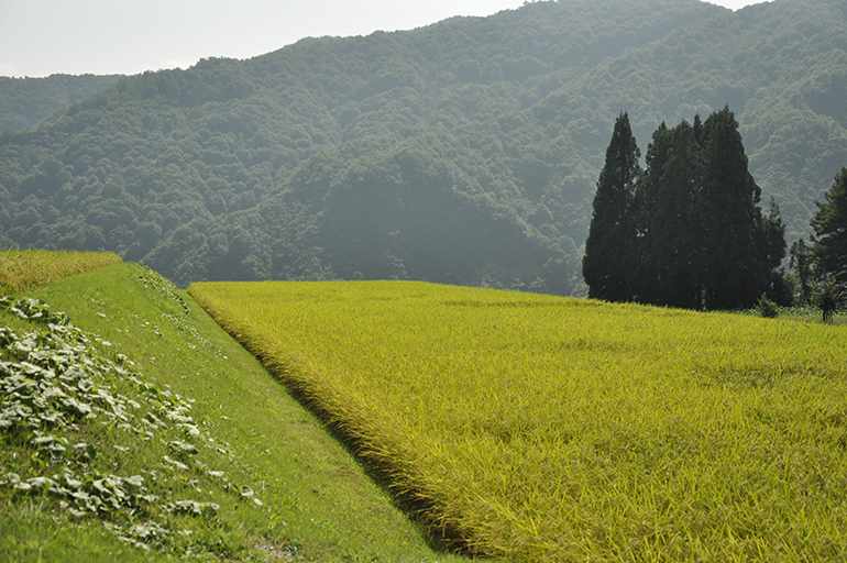 """新潟の豊かな自然が生んだお米のトップブランド""""南魚沼"""""""