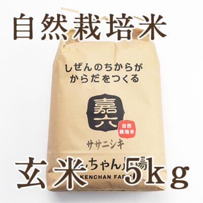 自然栽培米ササニシキ 玄米5kg