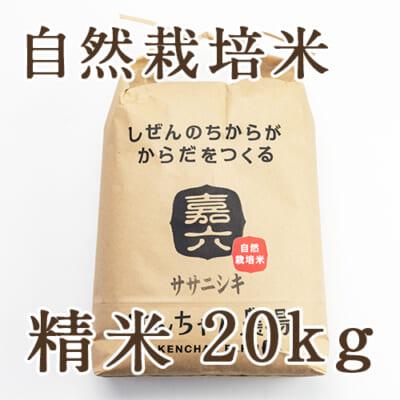 自然栽培米ササニシキ 精米20kg