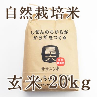 【定期購入】自然栽培米ササニシキ 玄米20kg