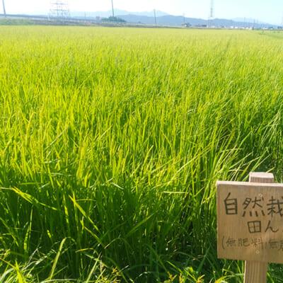 希少な自然栽培米を育てるけんちゃん農場