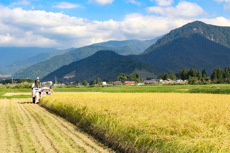 米の作付面積と収穫量において全国一位を誇る「新潟県」