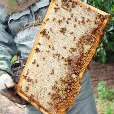 高純度・高糖度の「朝採りハチミツ」