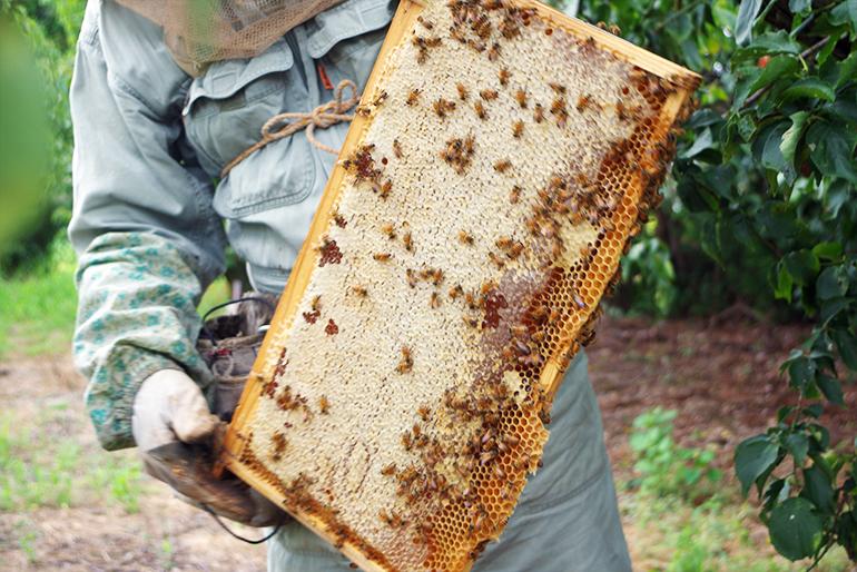 こだわりの「朝採りハチミツ」