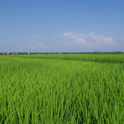 長い年月かけて培われた肥沃な大地
