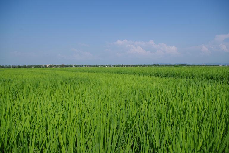 長い年月をかけて培われた肥沃な大地