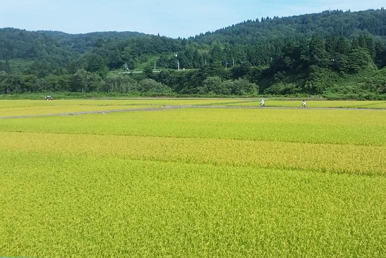 2.桜峰・高場山などが生む激しい寒暖差