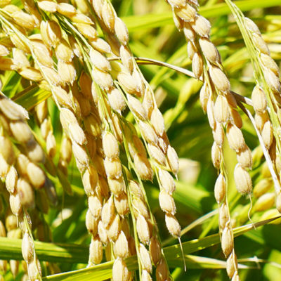 有機栽培の経験をもとに生み出したオリジナルブレンド