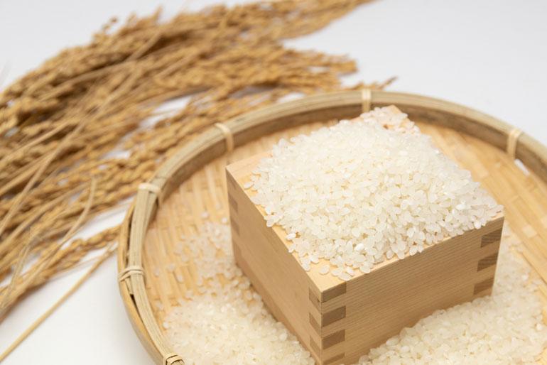 「嘉右衛門ご飯」のベースとなる米「五頭山系」