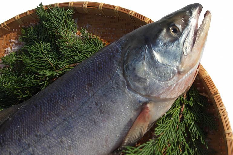 脂がのった美味しい村上産鮭を使用!