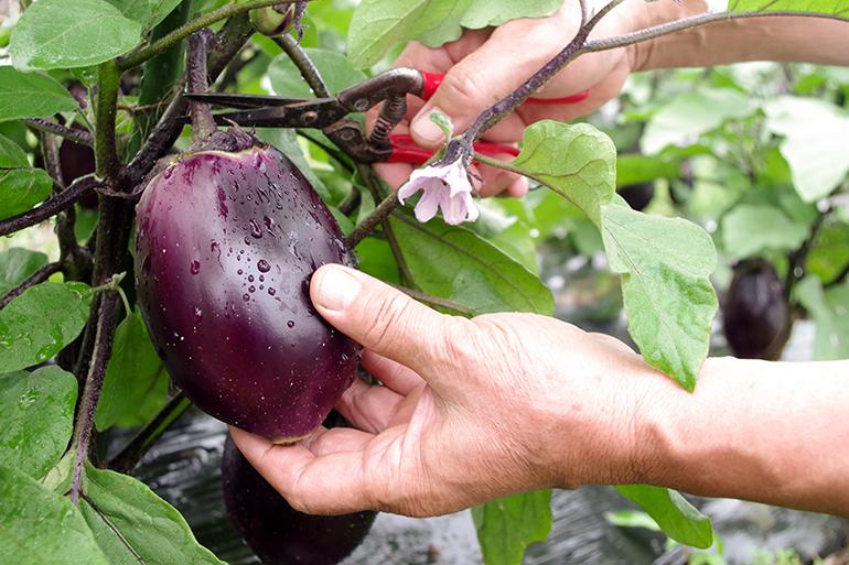 丁寧な土壌作りと減農薬・減化学肥料で栽培