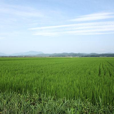 霊峰米山とほくほく線が見える田んぼ