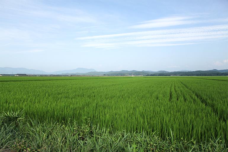 自然の中で育てた食べごたえ抜群のお米