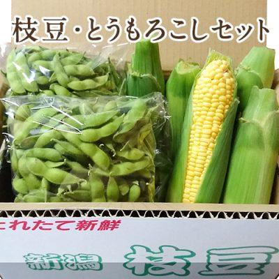 枝豆・とうもろこしセット