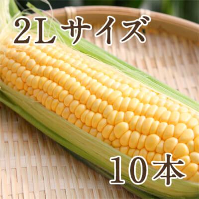 新潟産とうもろこし(黄色 2Lサイズ) 10本セット