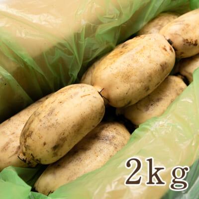 長岡産レンコン 2kg