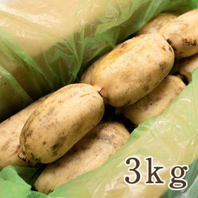 長岡産レンコン 3kg