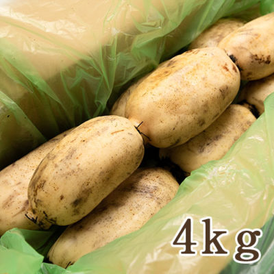 長岡産レンコン 4kg