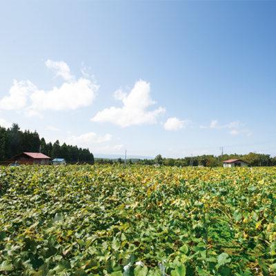 濃厚なぶどうを手掛ける「Amaya farm」