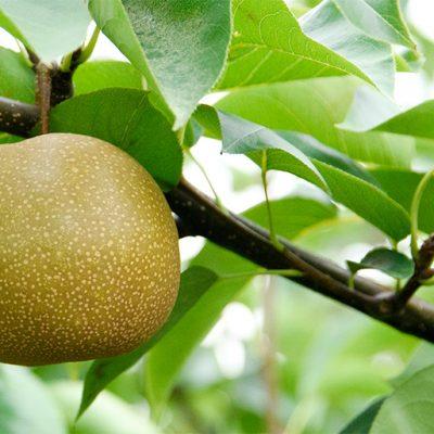 堆肥と卵殻を独自配合した有機質肥料を使用