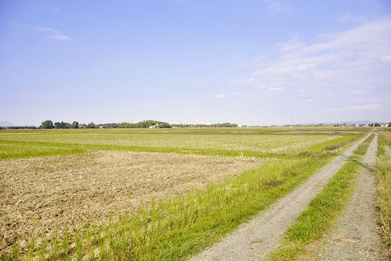 無農薬は雑草との戦い!自然の美味しさを求めて…