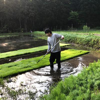 自然を生かした栽培を実践