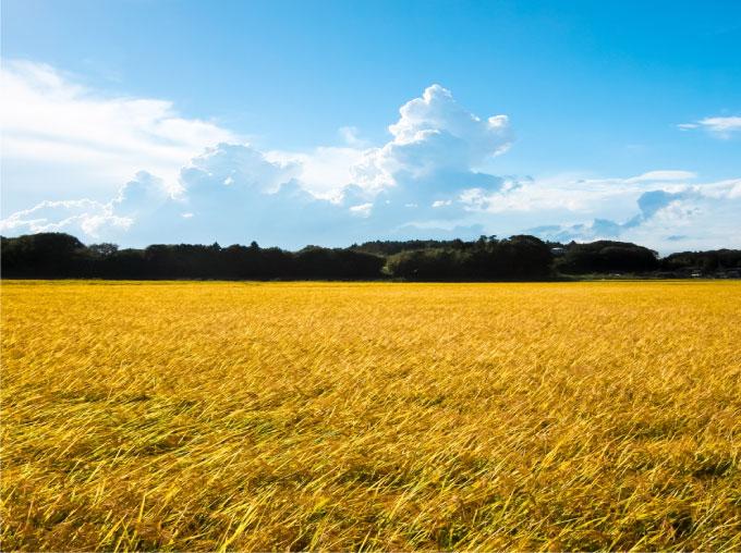 豊かな自然、県内でも有数の田園地帯