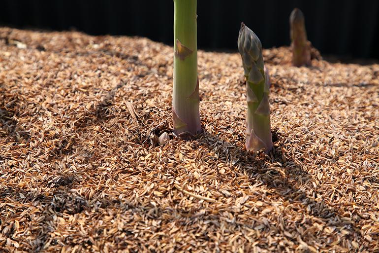 水循環の良い土壌整備の徹底