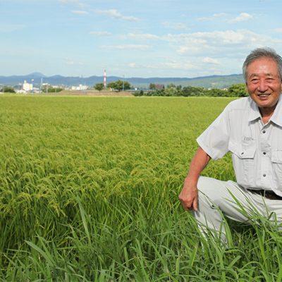 美味しい米を育てるために、毎朝稲を観察