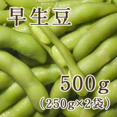 早生豆 500g(250g×2袋)