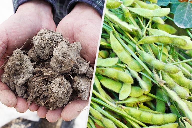 栄養たっぷりの土壌が育む特上の枝豆