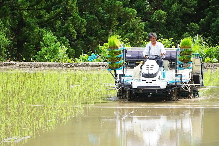 米の名産地魚沼でベテラン農家が作る極上米