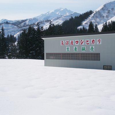 折笠地区の雪解け水で育てるお米