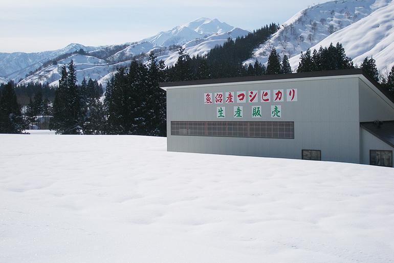 ミネラル豊富な雪解け水がもたらす強い旨味