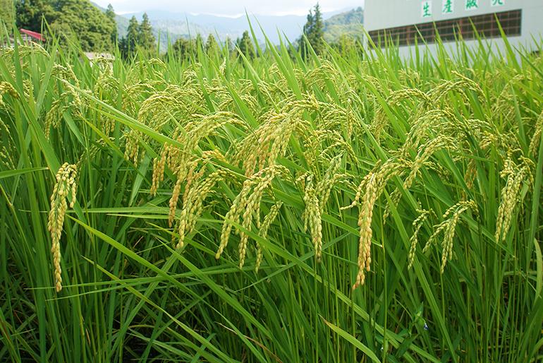 量よりも質を追い求める有機肥料栽培