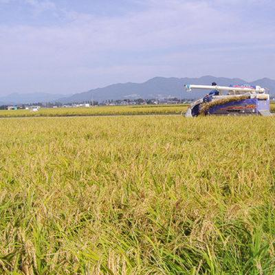 自然の力で生産されたお米