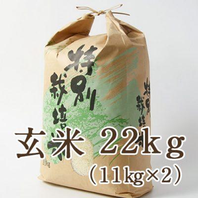 新発田市菅谷産コシヒカリ(特別栽培米)玄米22kg