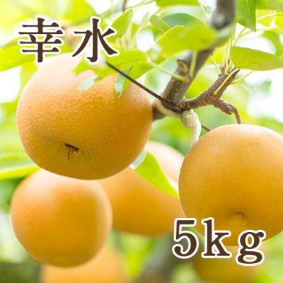 幸水 5kg(9〜14玉)