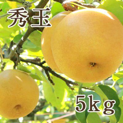 秀玉 5kg(8〜12玉)