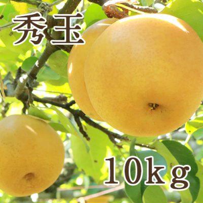 秀玉 10kg(16〜24玉)