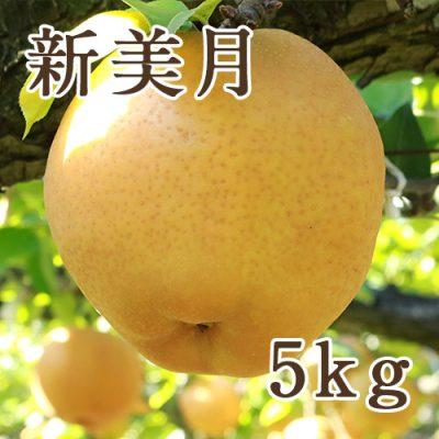 新美月 5kg(8〜12玉)