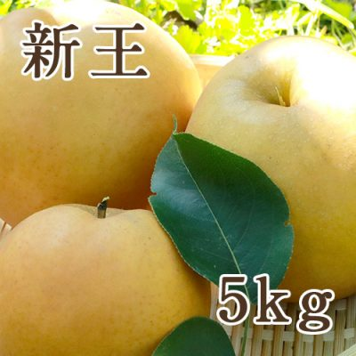 新王 5kg(8〜12玉)